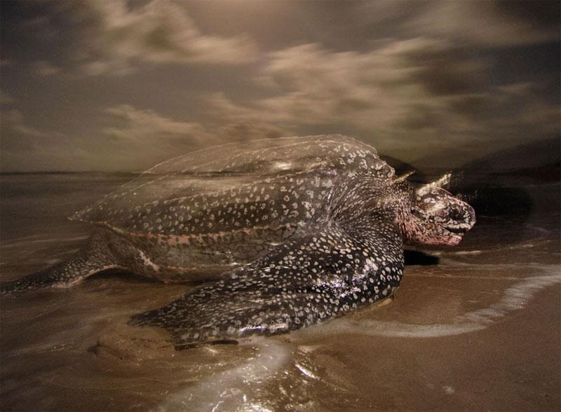 10 loài động vật có nguy cơ tuyệt chủng