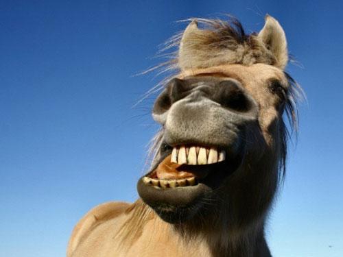 Những điều thú vị của loài ngựa