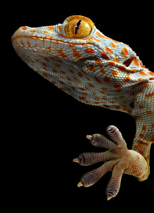 Đôi tay kỳ lạ của động vật