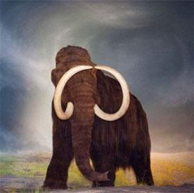 Phát hiện mới về nguyên nhân gây tuyệt chủng voi ma mút