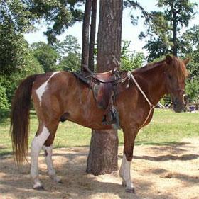 Những giống ngựa quý hiếm nhất thế giới