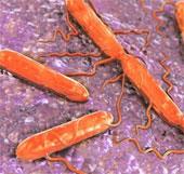 """Dùng hệ miễn dịch của vi khuẩn để khiến chúng """"tự tử"""""""