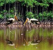 Phát triển hệ sinh thái rừng ngập mặn bằng khoanh tạo