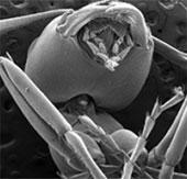 Vì sao kiến nâng được vật nặng gấp nhiều lần cơ thể?