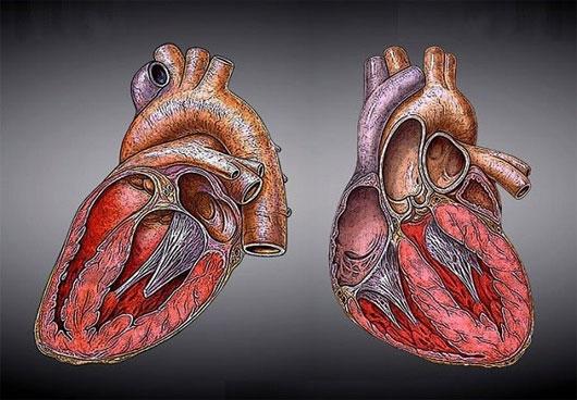 """Phương pháp """"hồi sinh"""" trái tim chỉ bằng một mũi tiêm"""