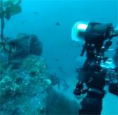 Video: Bạch tuộc cướp máy ảnh từ tay thợ lặn