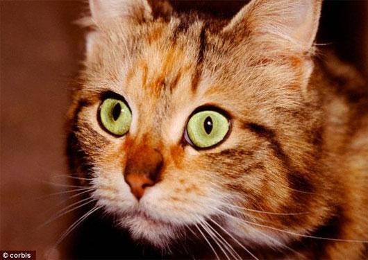 Chó và mèo có giác quan thứ 6