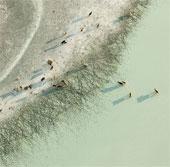 Cuộc sống của động vật hoang dã ở lòng chảo muối