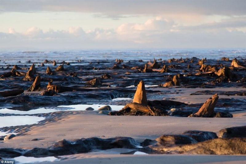 Rừng sồi ngàn năm tuổi phát lộ sau bão