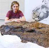 Hộp sọ khủng long nguyên vẹn ở Canada