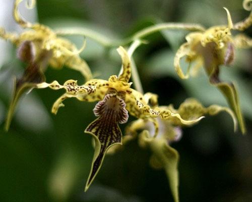Thế giới kỳ lạ của hoa lan