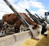 Thức ăn giàu năng lượng giúp giảm chất thải động vật