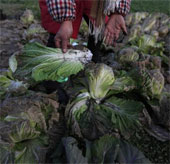 Ngành nông nghiệp Trung Quốc chết dần vì ô nhiễm không khí