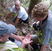 New Zealand lần đầu tiên phát hiện trứng hải âu petrel