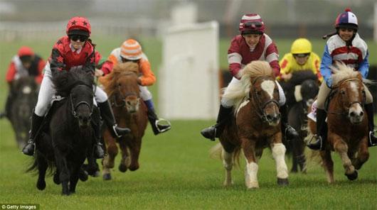 Ngày nay ngựa Shetland được dùng trong các trung tâm huấn luyện đua ngựa dành cho trẻ em.