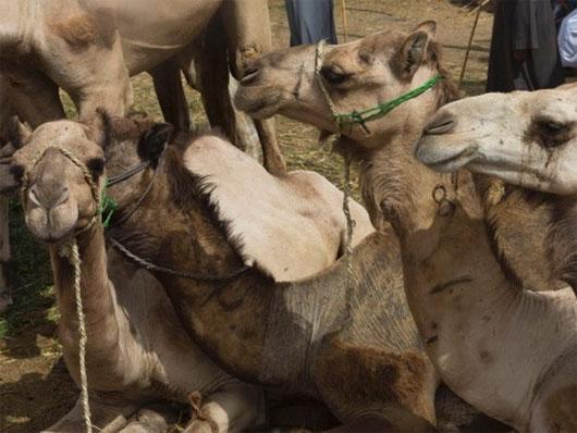 Ai Cập ghi nhận trường hợp tử vong đầu tiên do virus MERS