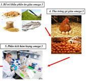 Việt Nam tạo thành công trứng gà giàu Omega-3