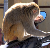 Ảnh đẹp: Khỉ biết soi gương
