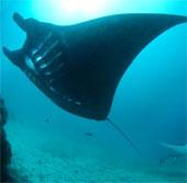 Cá có thể sống được dưới độ sâu lên tới 8.200m