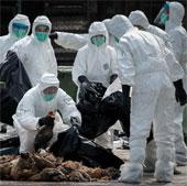Hong Kong phát hiện thêm ca nhiễm cúm H7N9 thứ 6