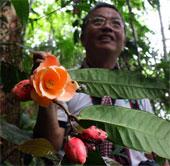 Hoa trà Việt Nam được thế giới công nhận loài mới