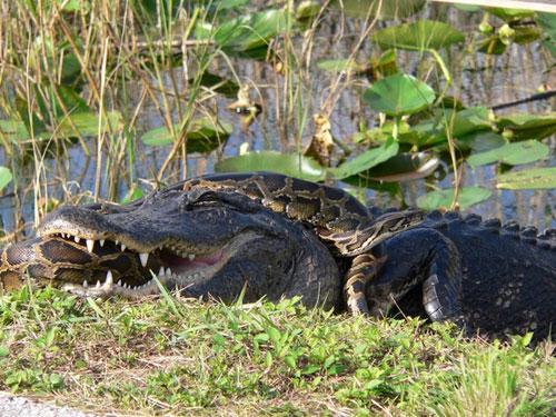 Những màn tấn công quyết liệt của động vật