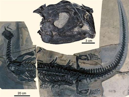 Loài bò sát kỳ lạ có hàng trăm chiếc răng nhọn như kim