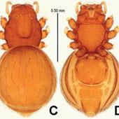 Phát hiện 5 loài nhện giáp mới
