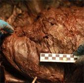 Thành tựu mới trong quá trình nhân bản voi ma mút thời tiền sử