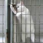 Chú mèo thông minh biết mở cửa lồng sắt