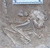 Tìm thấy xương mèo 5.600 năm tuổi ở Ai Cập