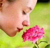 Mũi người ngửi được 1.000 tỷ mùi khác nhau
