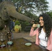 Tại sao cà phê phân voi đắt nhất hành tinh?