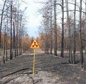 Chernobyl: Rừng cây kỳ lạ 30 năm không phân hủy