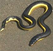 Khả năng thần kỳ của rắn biển