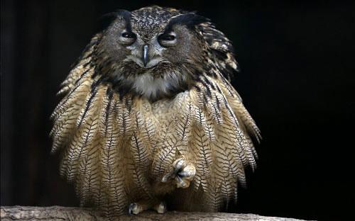 Ảnh động vật đẹp trong tuần: Cáo ấp trứng gà