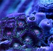 Khám phá vẻ đẹp kỳ diệu của san hô biển