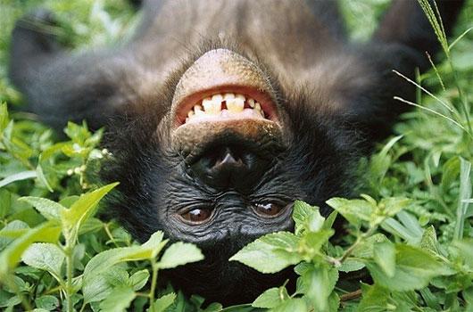 Với khỉ chuyện quan hệ đồng tính là quy luật tự nhiên