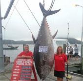 """Câu được cá ngừ """"siêu khủng"""" nặng 411,6kg"""