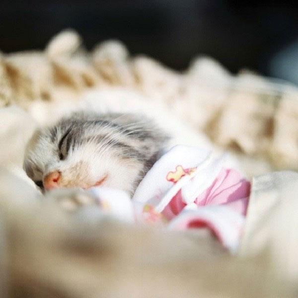 Khoảnh khắc cảm động khi các loài động vật đón nhận cái chết