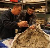 Loại bia có men chiết xuất từ hóa thạch cá voi 35 triệu năm