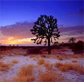 Sa mạc - bồn hút CO2