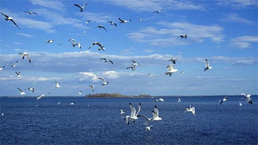 Đếm chim biển bằng cách ghi âm tiếng kêu