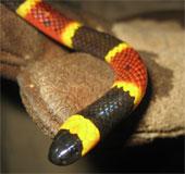 Video: Hành trình đi tìm rắn độc tại Việt Nam