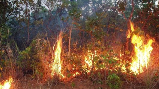 Cháy rừng và hạn hán có thể hủy hoại rừng Amazon