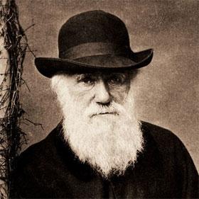 Càng mọc nhiều râu, đàn ông càng kém hấp dẫn