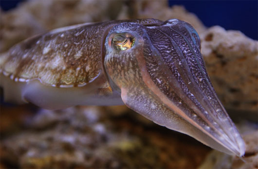 Những loài động vật thân mềm kỳ lạ