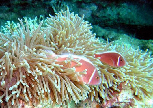 Nhiều loại sinh vật phù du và giáp xác cũng sử dụng canxi từ biển để tạo nên bộ xương cho mình.