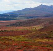 Thấy đài nguyên hàng triệu năm tuổi dưới dải băng Greenland