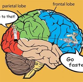 """Nghiên cứu cho thấy não bộ có hệ thống """"chống mất tập trung"""""""